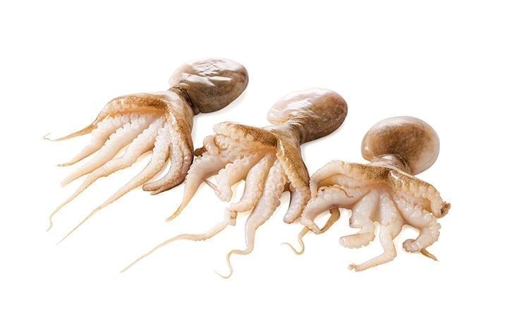 Poulpo Baby Octopus Groot Heel Zak Maat 1020 De Beste Verse